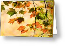 Subtle Colors Of Autumn Greeting Card