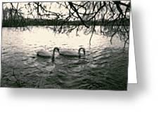 Subtle Swans  Greeting Card