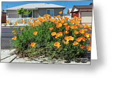 Suburban House On Orchard Avenue With Poppies Hayward California 3 Greeting Card