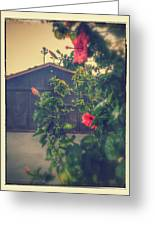 Suburbs Exotic Flowers  Greeting Card