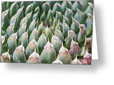 Succulant Spikes Greeting Card