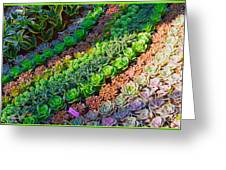 Succulent 1 Greeting Card