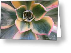 Succulent 2 Greeting Card