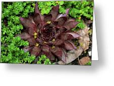 Succulent 4 Greeting Card