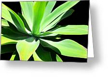 Succulent Agave Art By Sharon Cummings Greeting Card
