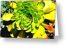 Succulent Close Up Greeting Card