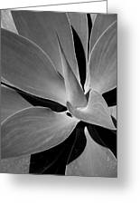 Succulent In Black And White Greeting Card