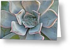 Succulent In Pastels Greeting Card
