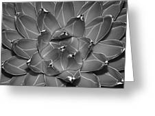 Succulent Ir Greeting Card