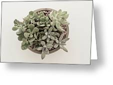 Succulent Plant From The Top Greeting Card