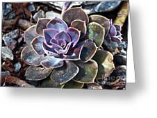 Succulent Plant Poetry Greeting Card