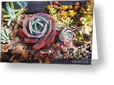 Succulent Plants. Multi-colored Greeting Card