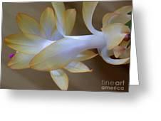 Succulent Season Greeting Card