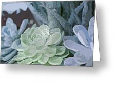 Succulents 2 Greeting Card