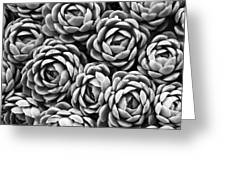 Succulents In Black And White Greeting Card