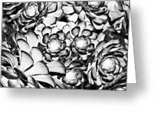 Succulents Monochrome Greeting Card