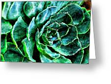 succulents Rutgers University Gardens Greeting Card
