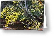 Sugar Maple Birch River Mirror Image Greeting Card