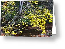 Sugar Maple Birch River Greeting Card
