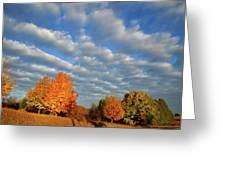 Sugar Maple Sunrise Along Route 31 Greeting Card
