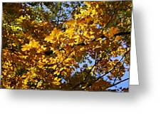 Sugar Maple Greeting Card
