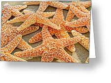 Sugar Starfish Greeting Card