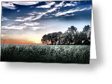 Sugarcane Fields  Greeting Card