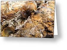Sugarloaf Snail Greeting Card