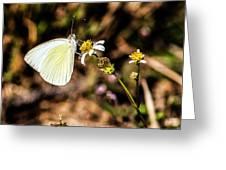 Sulfur Feeder Greeting Card