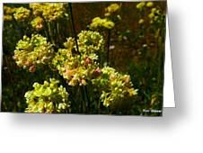 Sulfur Flower Greeting Card