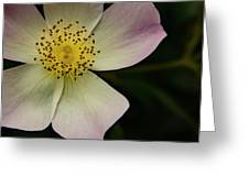 Sultry Hellebore Greeting Card