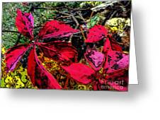 Sumac Beauty Greeting Card