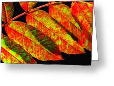 Sumac Leaves Greeting Card