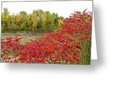 Sumac  Greeting Card