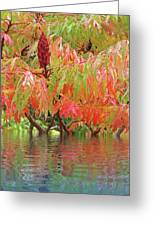 Sumac Tree Autumn Reflections Greeting Card