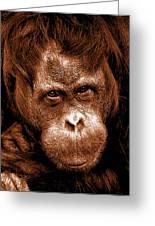 Sumatran Orangutan Female Greeting Card