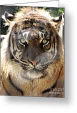 Sumatran Tiger-1440 Greeting Card