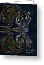 Sumatran Tiger Reflection Greeting Card