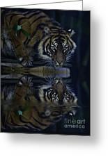 Sumatran Tiger Reflection Greeting Card