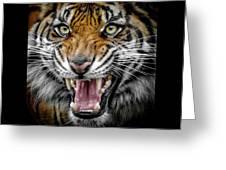 Sumatran Tiger Snarl Greeting Card