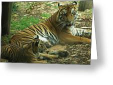 Sumatran Tigers  Greeting Card