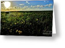 Summer Beach Daisy 2 Greeting Card