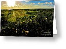 Summer Beach Daisy Greeting Card