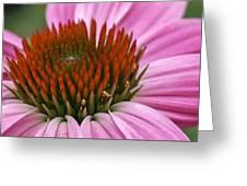 Summer Beauty Greeting Card