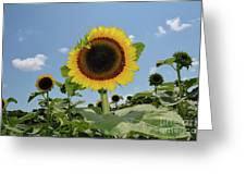Summer Begin Greeting Card