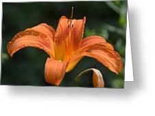 Summer Bloom-3 Greeting Card