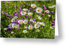 Summer Blooms Greeting Card