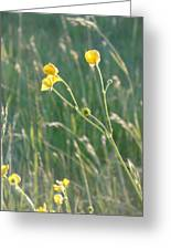Summer Buttercups Greeting Card