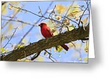 Summer Cardinal Greeting Card