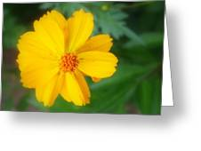 Summer Coreopsis Greeting Card